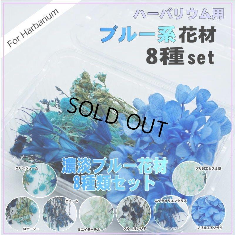 画像1: 【A】ハーバリウム花材8種セット(ブルー系) (1)