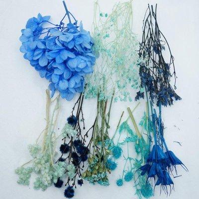 画像3: 【A】ハーバリウム花材8種セット(ブルー系)