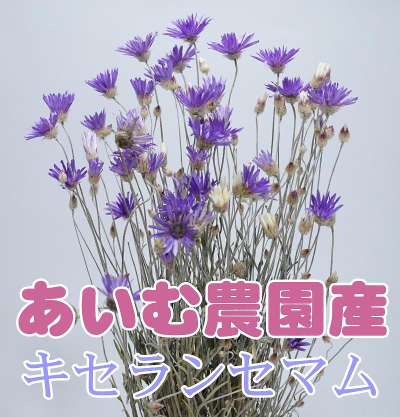 画像1: 【A】キセランセマム (1)
